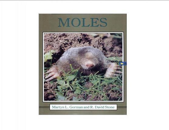 the-mole