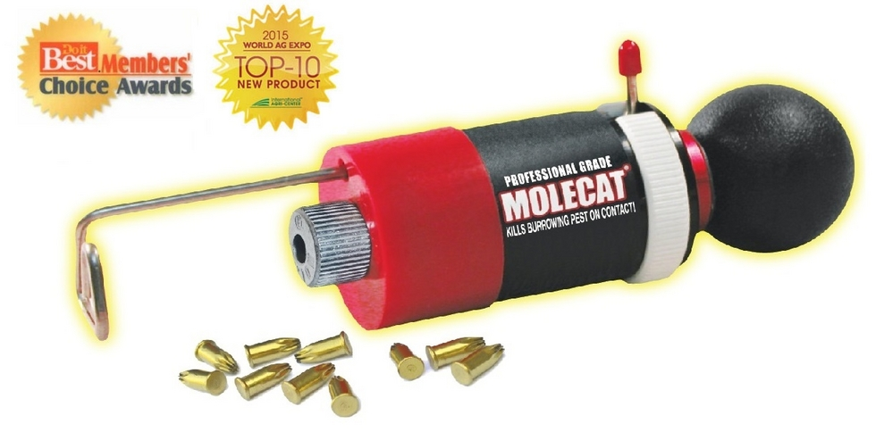 Molecat The Best Way To Get Rid Of Moles More