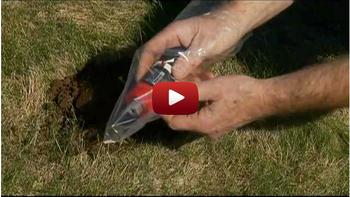 Molecat The Best Way To Get Rid Of Moles More